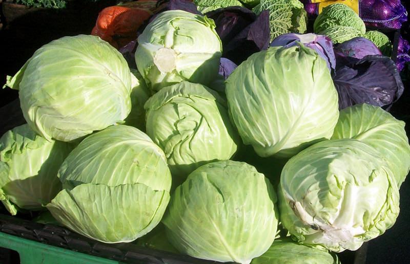 Есть мнение, что сбор капусты стоит производить только спустя 10 суток после первого заморозка